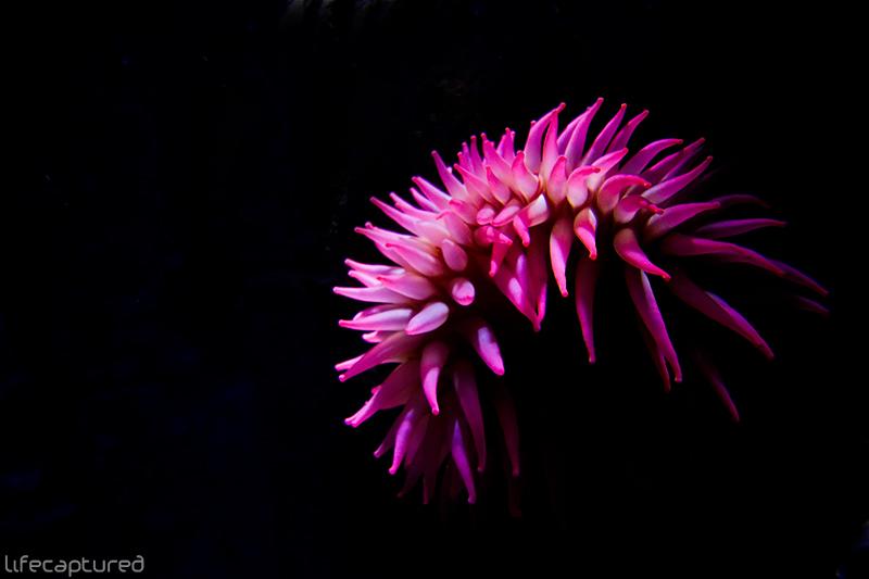 IMAGE: http://fc63.deviantart.com/fs39/f/2009/002/c/b/cb7dfc4468fdb925a1f12240e9ec4ce2.jpg