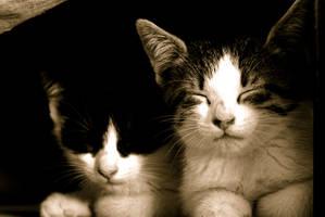 Kittens by FoxTaleStudio