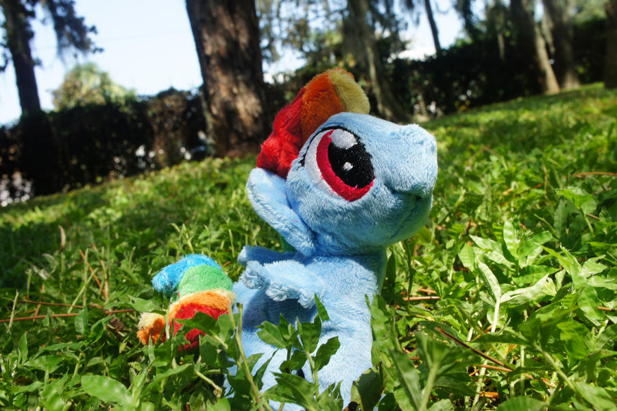 Filly Rainbow Dash :FOR SALE: by LordBoop