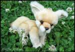 Fennec Fox Kit