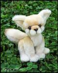 Fennec Fox - supposedly