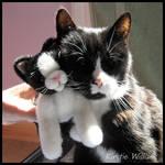 2 Kitties - 1 Plush