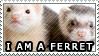 I Am A Ferret