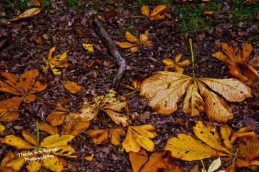 Fall Season by VanessaTSLarsen