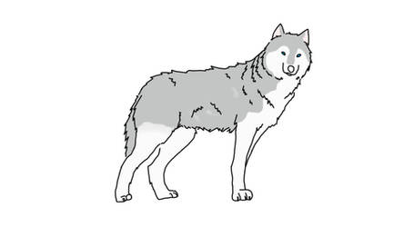 First Time Drawing A Wolf