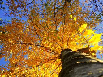 Autumn Tree by Helena-SunShine