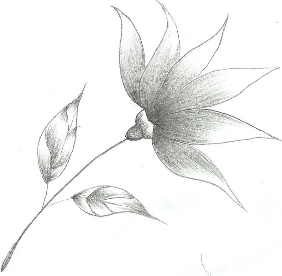 Easy Flower Drawings In Pencil
