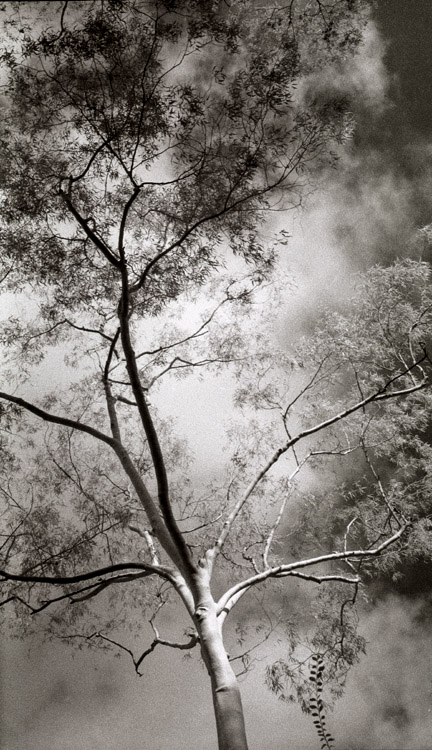 Infrared tree by atomjell