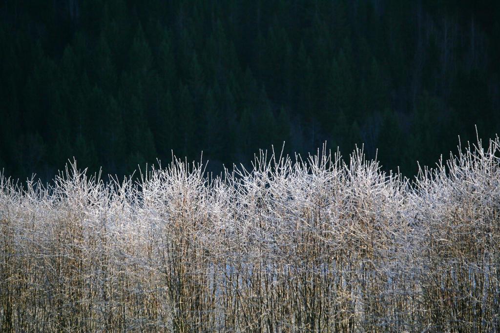 Frozen by Bellatrix007