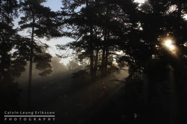 Foggy Rays by cleriksson