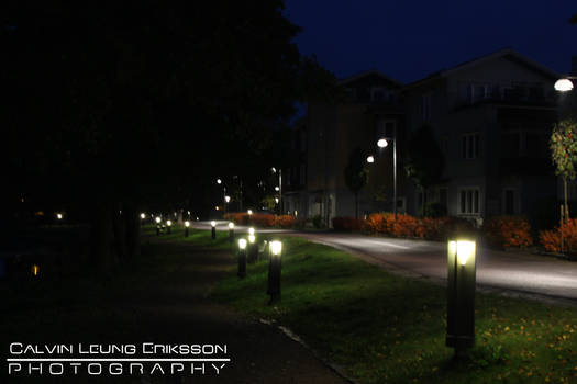 The Lights Lead the Way