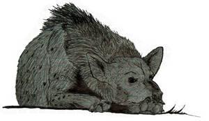 Hyena by pfernona