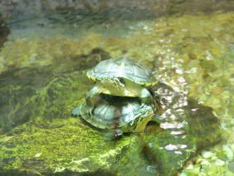 Happy turtles by pfernona
