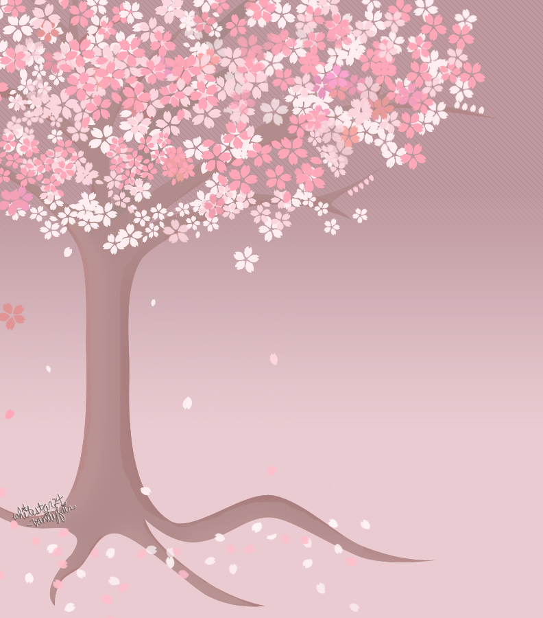 cherry tree drawing in blossom. cherry tree drawing. cherry