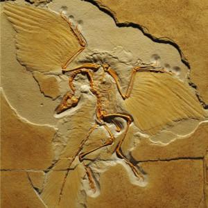 Lithographica's Profile Picture