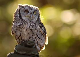 Sunny Little Owl by weelittlesoul