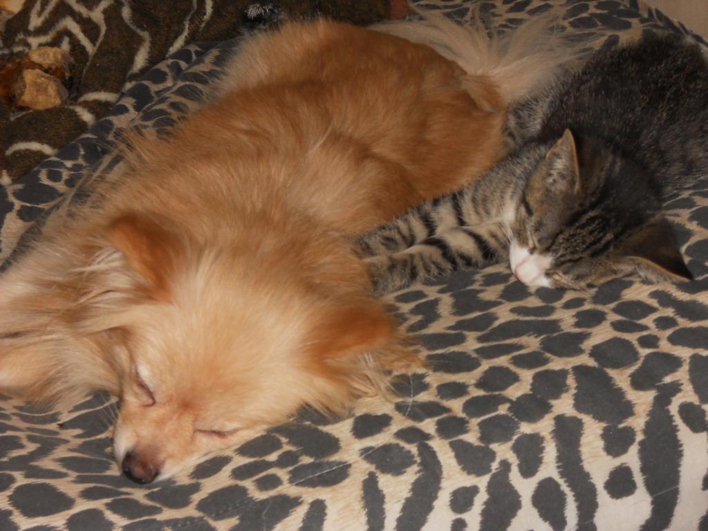 cat dog by pomchillasitems