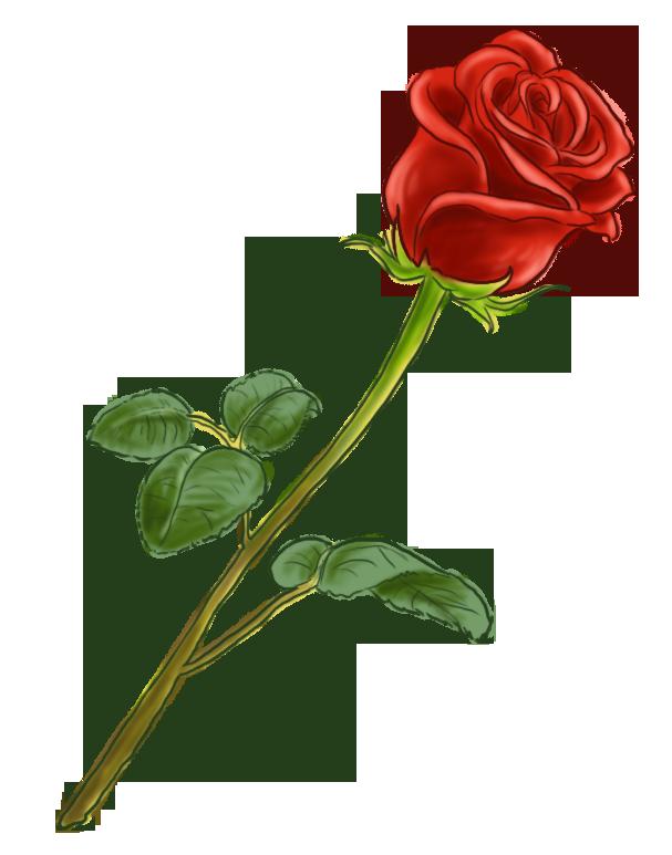 Rose Rouge Plantes Vivaces Fleurs Roses Motortrends