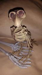Bones by VulcanSarek22