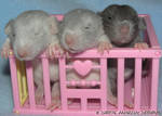 Three Little Mice...er, rats..