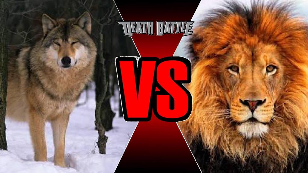 Wolf vs. Lion b...