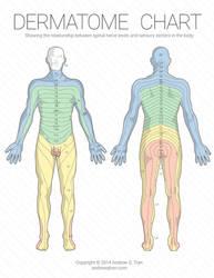 Dermatome Chart