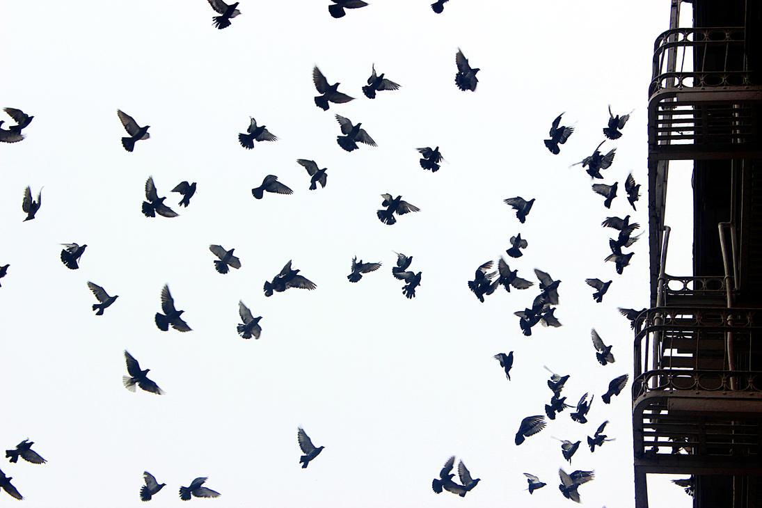 Flocking Behavior by patrick-brian