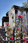 St. Louis Cemetery X