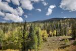 Fall in Colorado IX