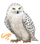 Snowy Owl by Gingy1380