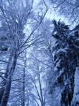 Snowy Trees Stock