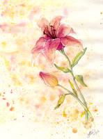 Watercolor Lilies by Rosaka-Chan