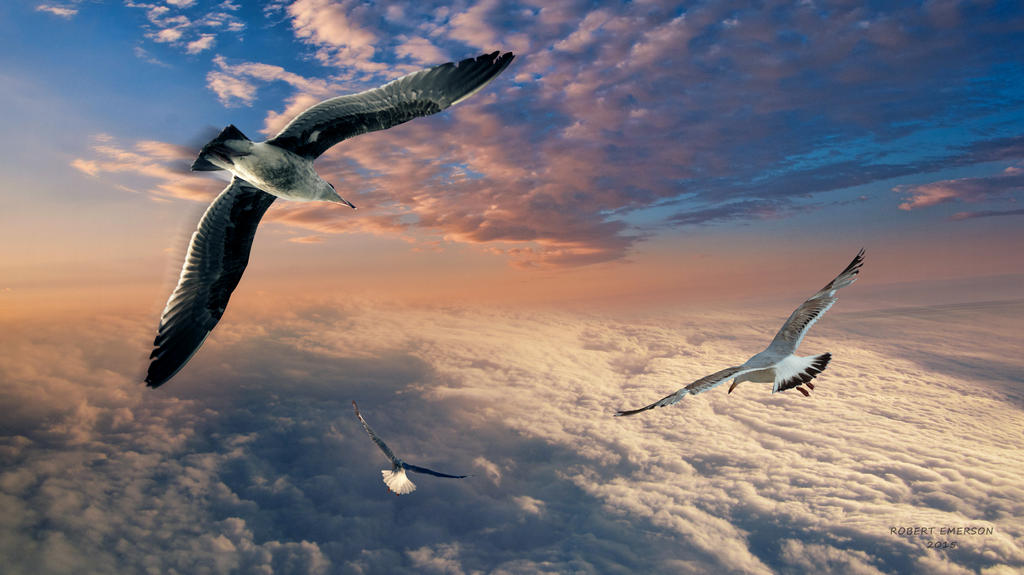 Soaring by robhas1left