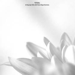 White by too-much4you