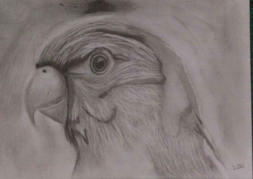 Parakeet Grid Practicing by GabrielLoboDX