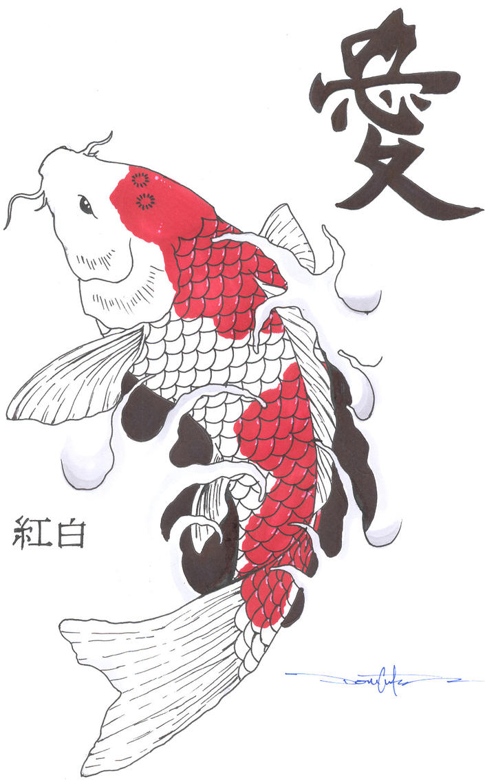 Kohaku koi fish by schwarze1 on deviantart for Koi fish sketch