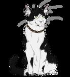 Warrior Cats #038 - Bone