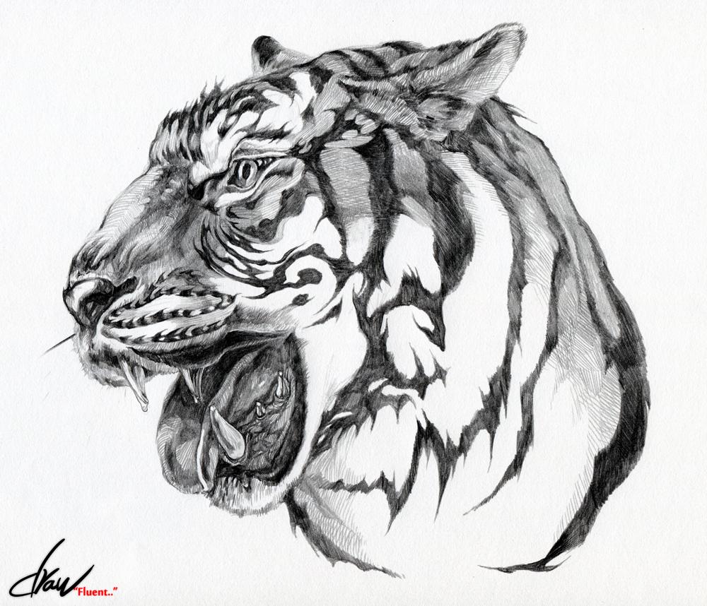 Tiger face by drawfluent on DeviantArt