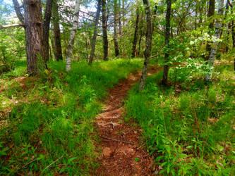 Path by BrickWallDrawsStuff