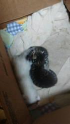 Three Little Kittens by LeopardStrike2