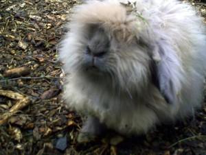 fluffyheid's Profile Picture