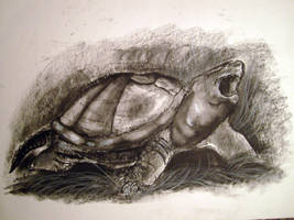 Snapping Turtle in Charcoal