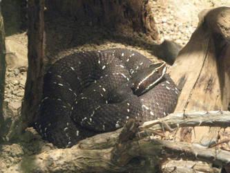 Beautiful Snake