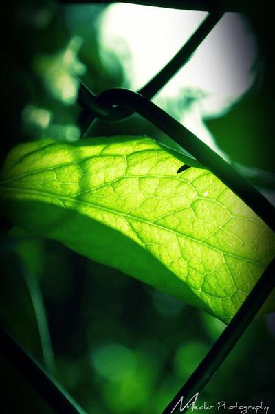 Wasting Light- A Bug's Life. by xroxyfoxyx