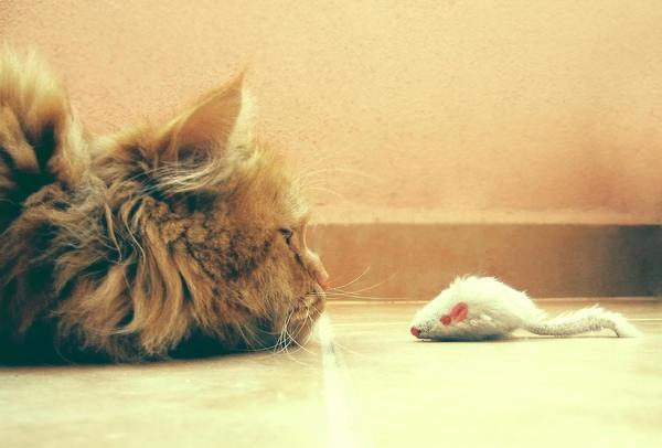 Cat vs Mouse by jojobatanesi