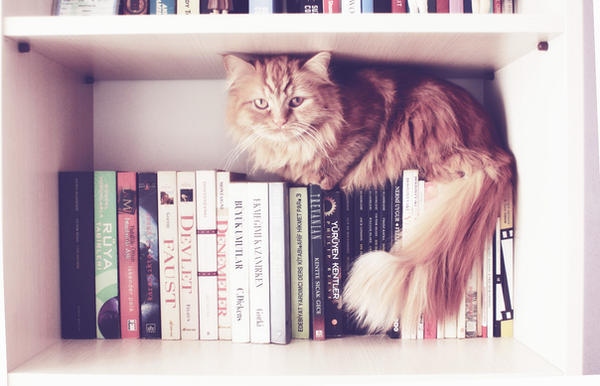 i love books. by jojobatanesi