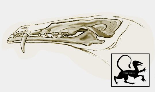 Strider skull revision by BellatrixBones