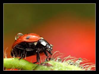 In Poppyland by damcigpa