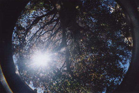 Fisheye tree by RRosiEXD