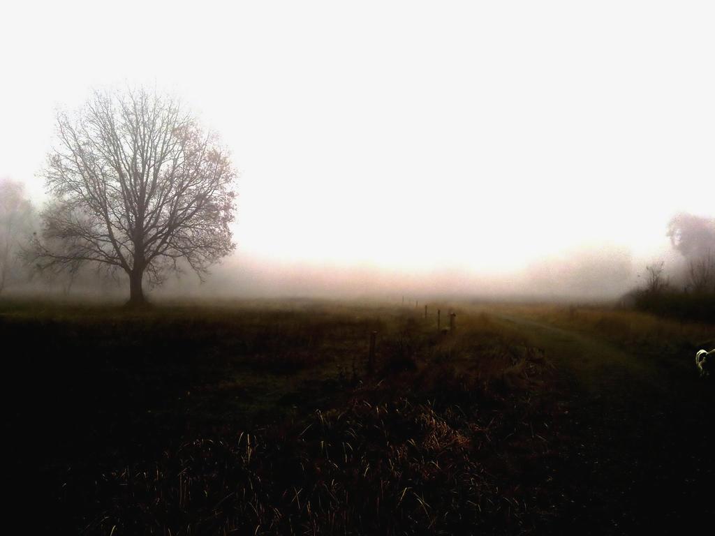 Foggy by NiDiMe